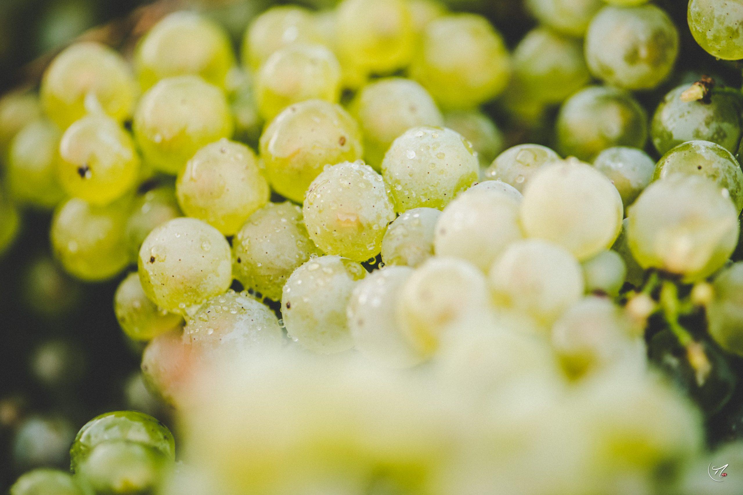 Grand Blanc L.V. Extra Brut 1999 - Champagne Philipponnat