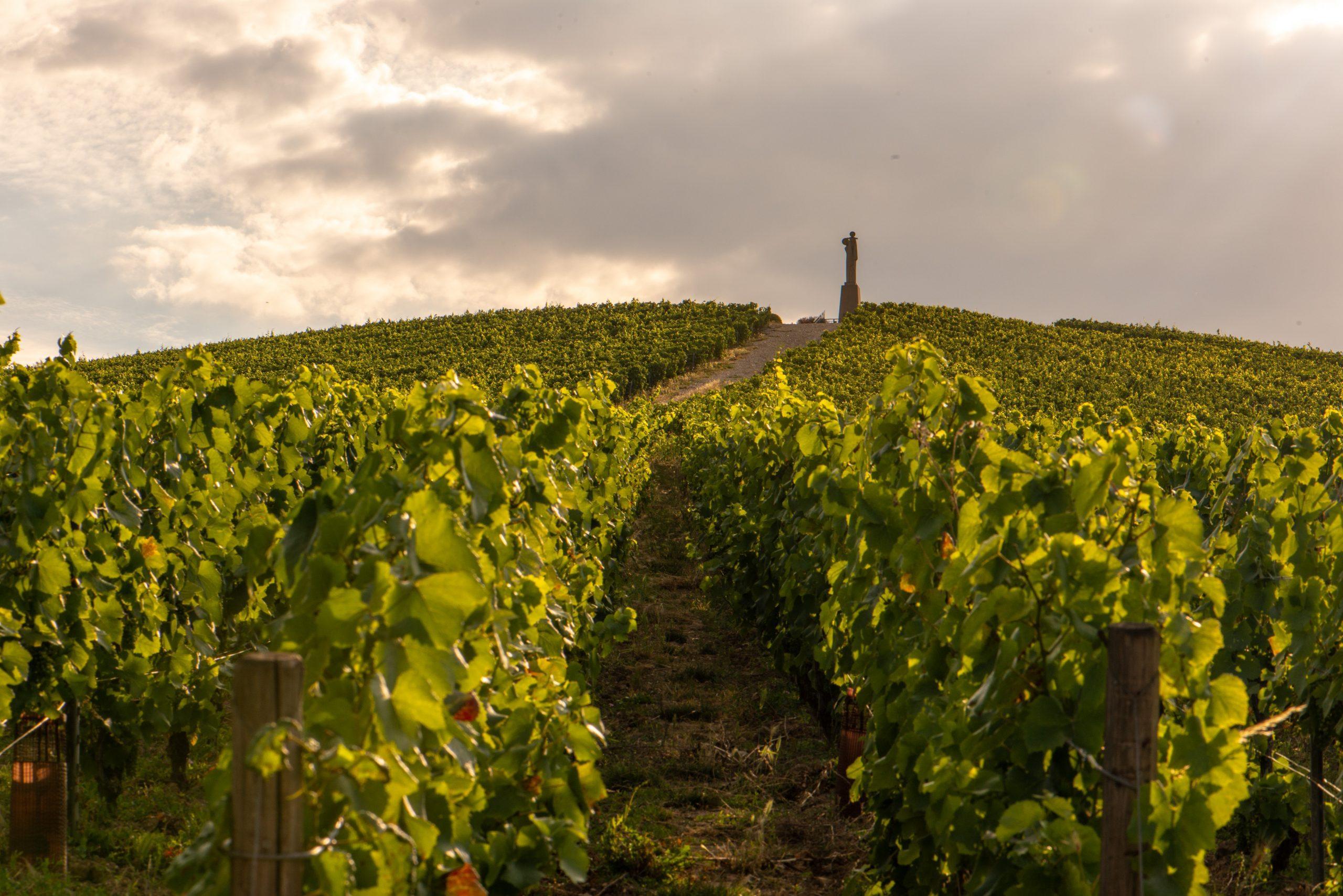 La Rémissonne Extra Brut 2009 - Champagne Philipponnat